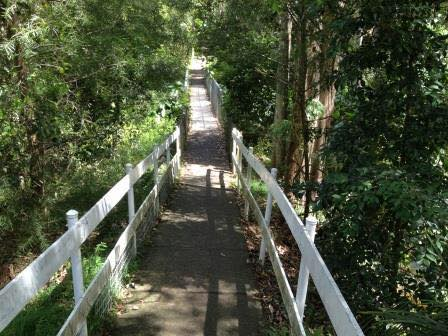 Local Family Friendly Bush Walks