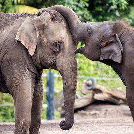 Taronga Zoo Annual Pass