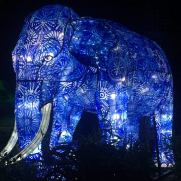 We Visited Vivid Sydney at Taronga Zoo