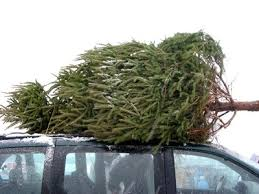 Where to Buy a Real Christmas Tree