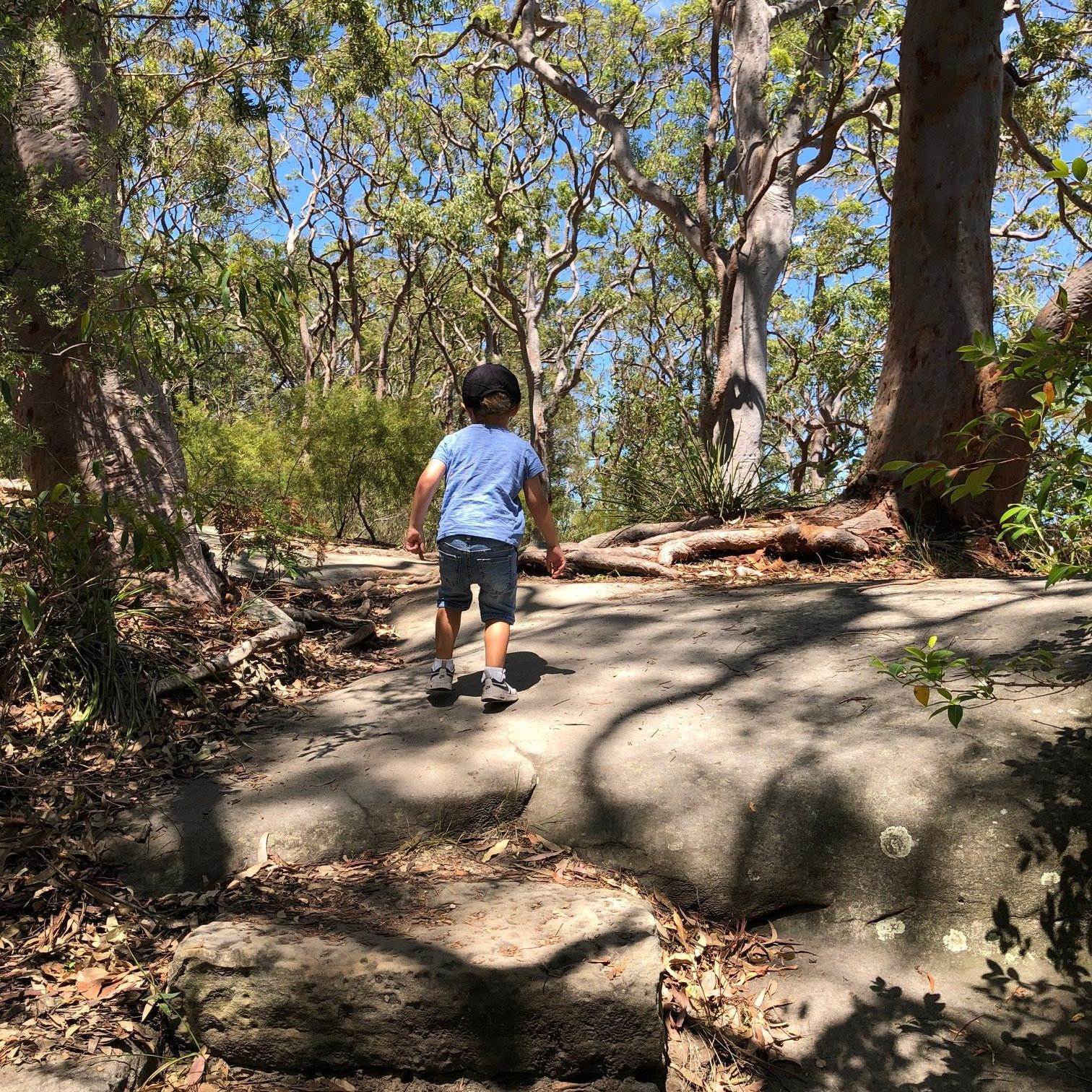 Berry Island Reserve- Playground + Bush Walk on Sydney Harbour
