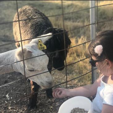 Starline Alpaca Farmstay Review PLUS Exclusive Discount!