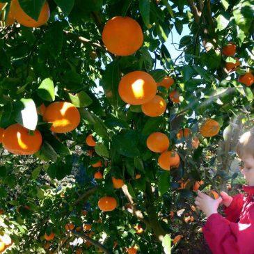 Fruit Picking: 2020 Edition