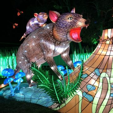 We Visited Vivid Sydney at Taronga Zoo