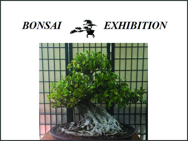 Bonsai Exhibition presented by Bonsai Study Group - West Pymble