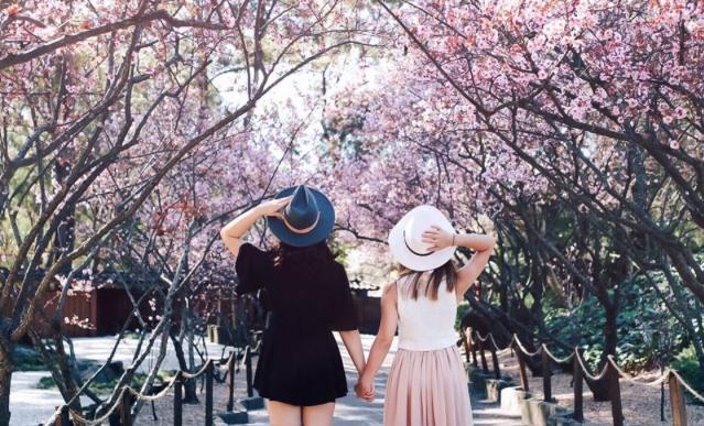 Sydney Cherry Blossom Festival, Auburn Botanic Gardens