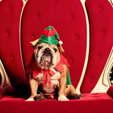 Where To Get The Pawfect Santa Photo With Your Pet