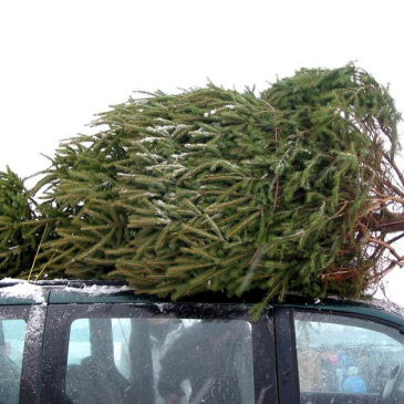 Where to Buy a Real Christmas Tree 2019