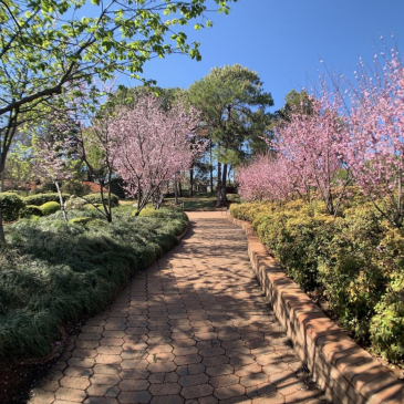🌳🌸 Sydney's Best Secret Gardens 🌳🌸