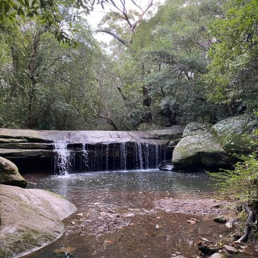 Terrys Creek Waterfall Walk – Epping/Eastwood