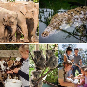 11 Places Around Sydney to Visit Animals