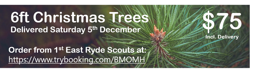 Fresh Cut Xmas Trees - 1st East Ryde Scouts