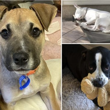 Rescue Pups – 3 Local Mums Share How They Found Their Forever Pet